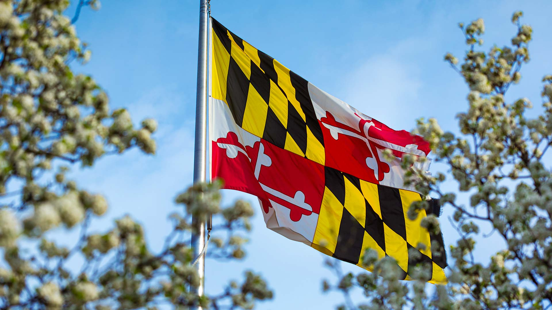 Maryland Flag on UMD's College Park Campus